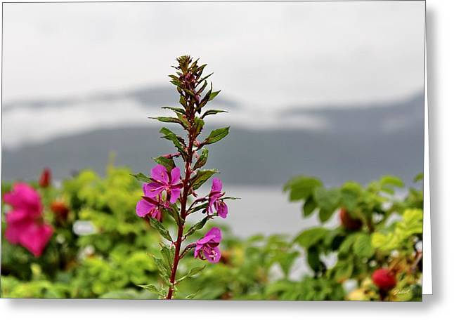 Wild Flowers In Hjelmeland Rogaland Norway By Julia Fine Art            Greeting Card by Julia Fine Art And Photography