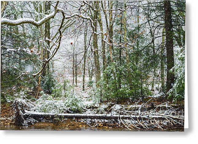 American Sycamore Greeting Cards -  Williams River Snow Greeting Card by Thomas R Fletcher