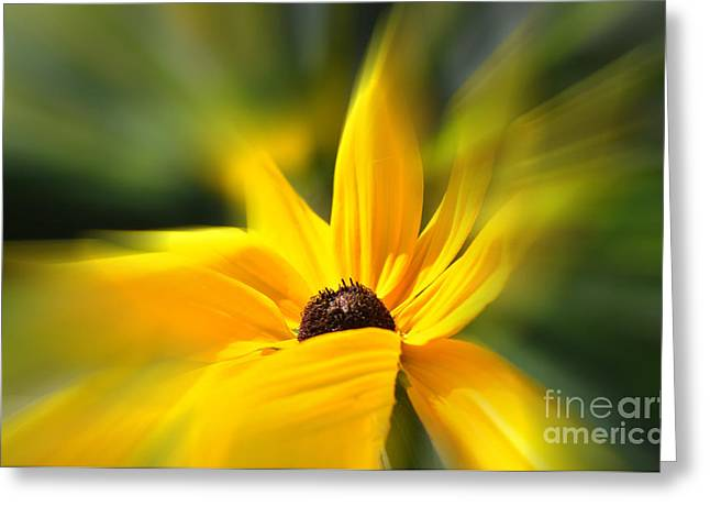 Windswept Mixed Media Greeting Cards -  Windswept Black Eyed Susan Greeting Card by Elaine Manley