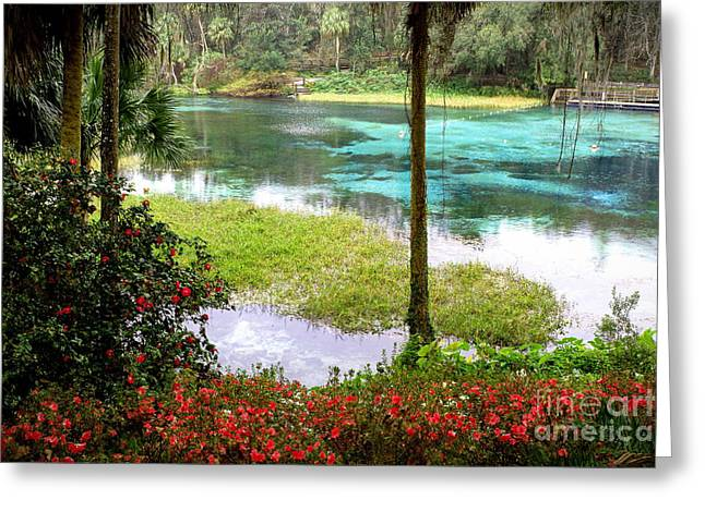 Richard Burr Greeting Cards -  Winter in Florida Greeting Card by Richard Burr