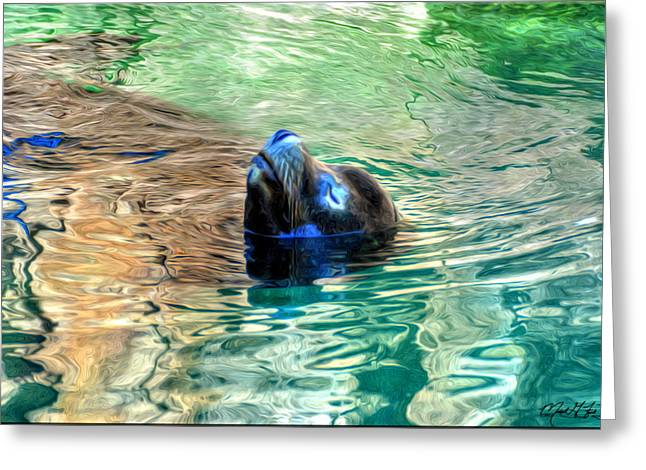 California Sea Lions Greeting Cards - 001A California Sea Lion Greeting Card by Michael Frank Jr