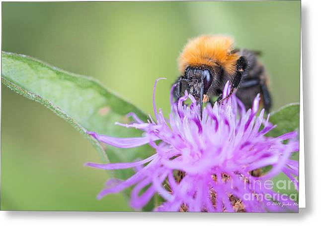 Narure Greeting Cards - 02 Common carder bee Greeting Card by Jivko Nakev