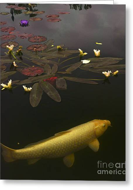 0212 Yellow Koi Greeting Card by Lawrence Costales