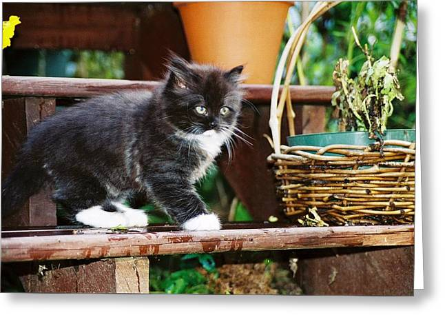 Kitten Prints Greeting Cards - 037 11A Kitten Boots Film.jpg Greeting Card by Robin Lee Mccarthy Photography