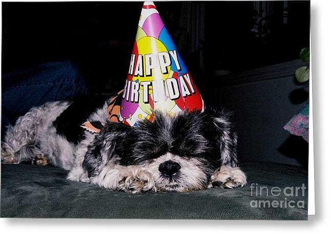 Party Hat Posters Greeting Cards - #056 6 Happy Birthday Shitzu Greeting Card by Robin Lee Mccarthy Photography