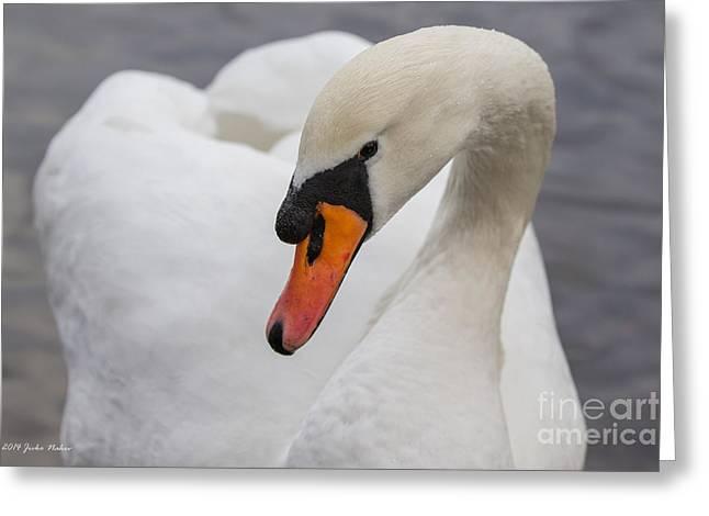 Swans... Greeting Cards - 06 Mute swan Greeting Card by Jivko Nakev