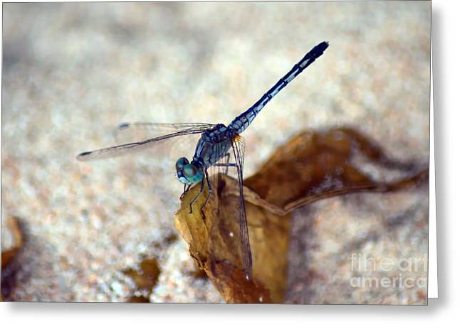 Michelle Greeting Cards -  Blue Dragonfly Greeting Card by Michelle Meenawong