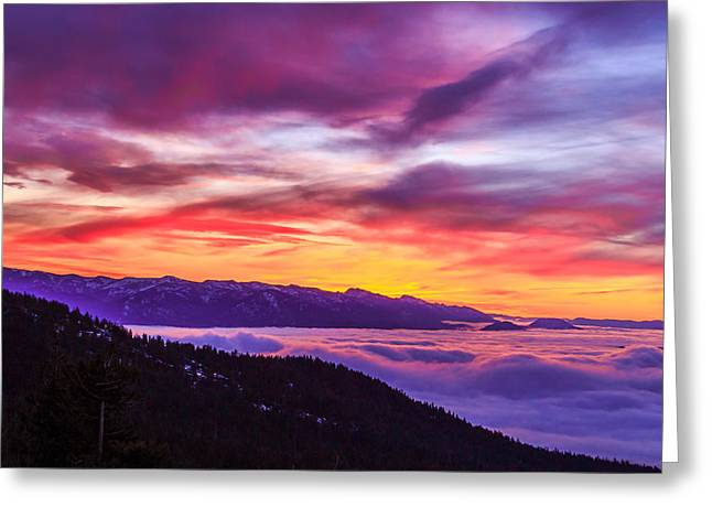Schweitzer Greeting Cards - 1-29-2015 Greeting Card by Kirk Miller