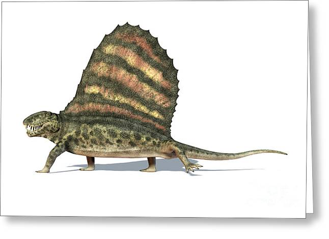Large Scale Greeting Cards - 3d Rendering Of A Dimetrodon Dinosaur Greeting Card by Leonello Calvetti