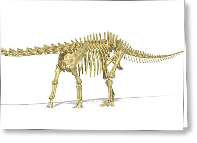 Animal Body Part Greeting Cards - 3d Rendering Of A Diplodocus Dinosaur Greeting Card by Leonello Calvetti