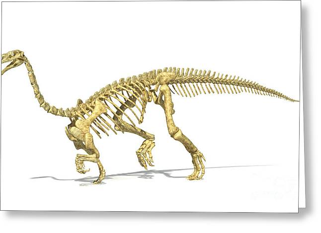 Saurischia Greeting Cards - 3d Rendering Of A Plateosaurus Dinosaur Greeting Card by Leonello Calvetti
