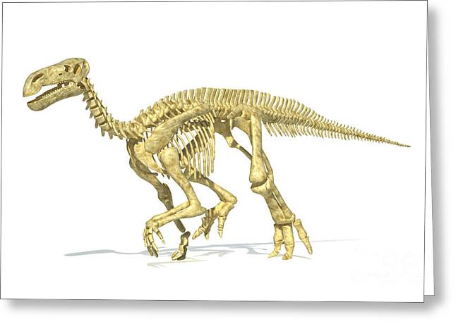 Saurischia Greeting Cards - 3d Rendering Of An Iguanodon Dinosaur Greeting Card by Leonello Calvetti