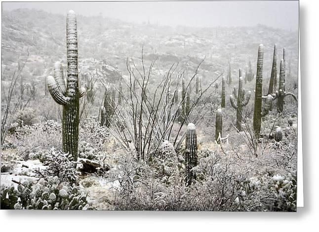 A Desert Snow Day  Greeting Card by Saija  Lehtonen