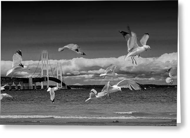 Mackinaw City Greeting Cards - A Flock of Gulls by the Straits of Mackinac Greeting Card by Randall Nyhof