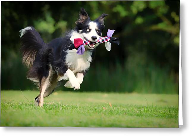 Sheep Dog Greeting Cards - A Game of Fetch Greeting Card by Katrin Kerou