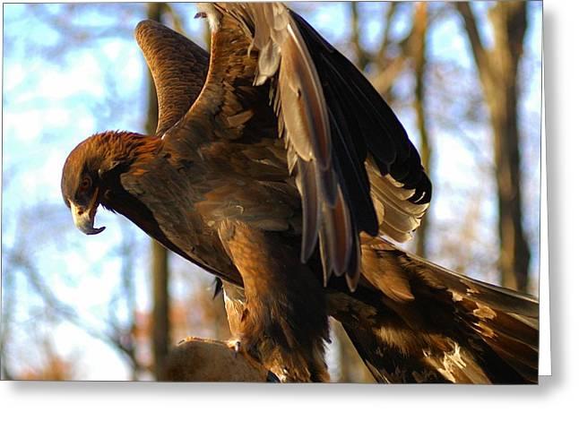 A Golden Eagle Greeting Card by Raymond Salani III
