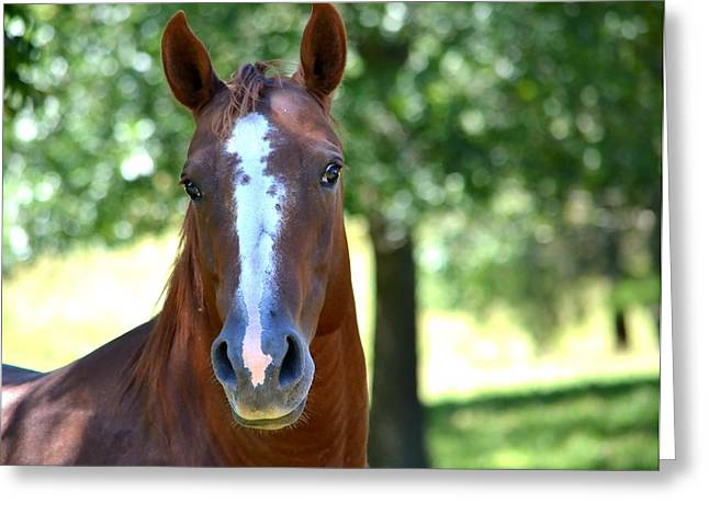 Breeds Greeting Cards - A Horse Is A Horse Greeting Card by Deena Stoddard