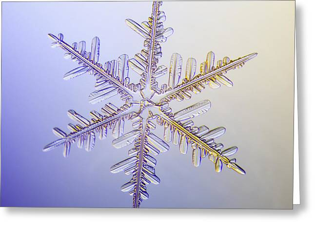 A Real Snowflake Showing The Classic Greeting Card by Marion Owen