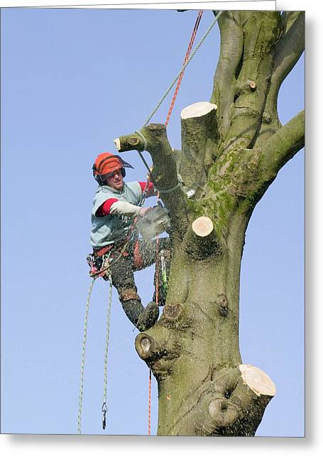 A Tree Surgeon Chopping A Tree Down Greeting Card by Ashley Cooper