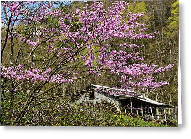 Cercis Greeting Cards - Abandoned . . . Greeting Card by Thomas R Fletcher