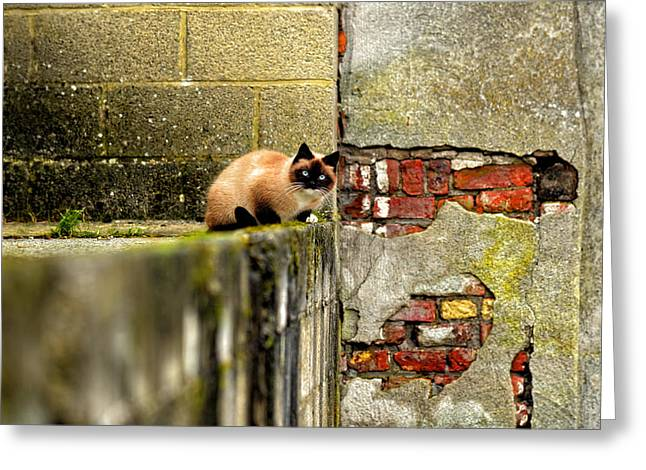 Nature Pyrography Greeting Cards - Abandoned cat outdoors Greeting Card by Oliver Sved