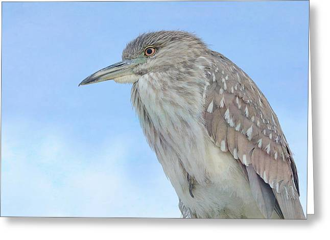 Crowned Heron Greeting Cards - Above The Fray Greeting Card by Fraida Gutovich