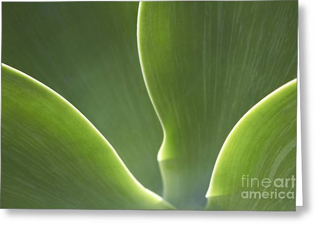 Leaf Abstract Greeting Cards - Abstract Flower Greeting Card by Tony Cordoza