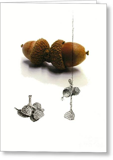 Pen And Ink Drawing Greeting Cards - Acorns Greeting Card by Adam Long