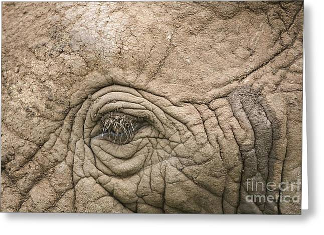 Eyelash Greeting Cards - African Elephant Eye And Skin Greeting Card by PhotoStock-Israel
