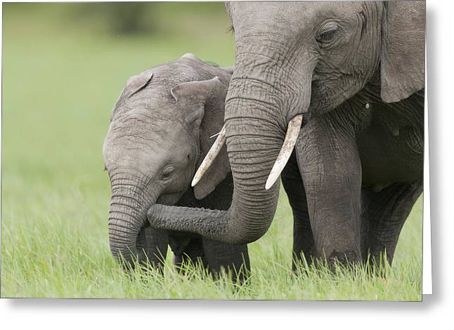 Emoting Greeting Cards - African Elephant Juvenile And Calf Kenya Greeting Card by Tui De Roy
