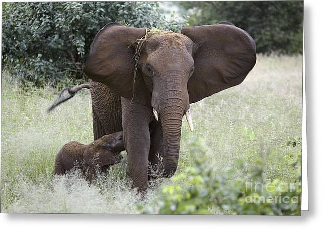 Adult And Child Greeting Cards - African Elephants Greeting Card by PhotoStock-Israel