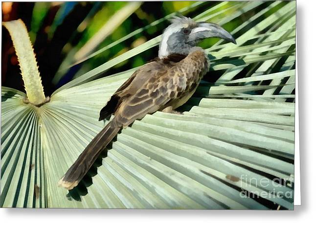 Hornbill Paintings Greeting Cards - African Grey Hornbill Greeting Card by George Atsametakis