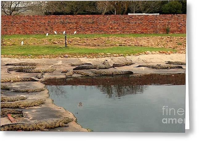 Winelands Greeting Cards - African Nile Crocodiles Greeting Card by Lisa Byrne
