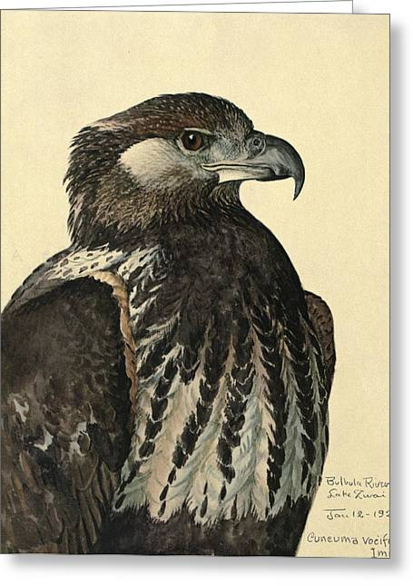 African Sea Eagle Greeting Card by Louis Agassiz Fuertes
