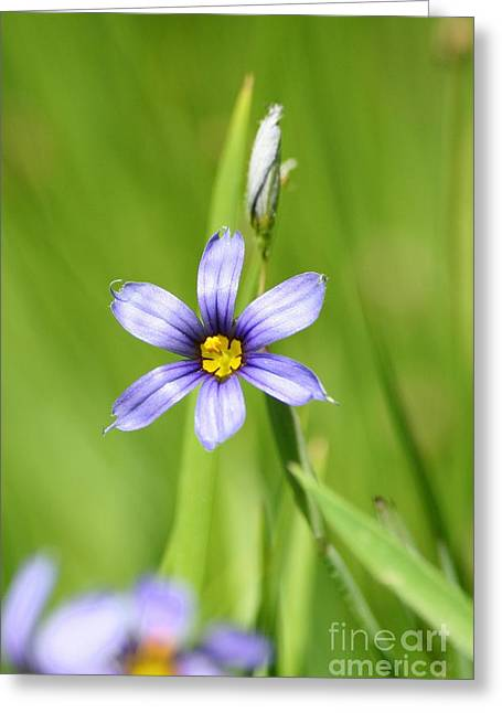 Wildflowers Greeting Cards - After Rain  Greeting Card by Neal  Eslinger