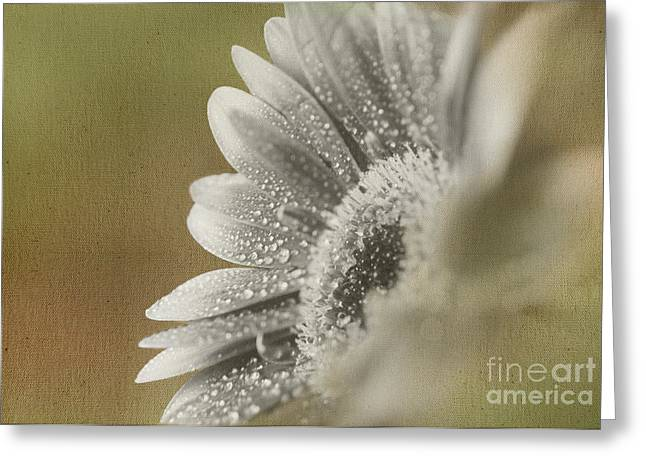Flower Photos Greeting Cards - After the Rain Greeting Card by Eden Baed