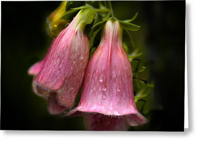 Pink Digital Greeting Cards - After the Rain Greeting Card by Jessica Jenney
