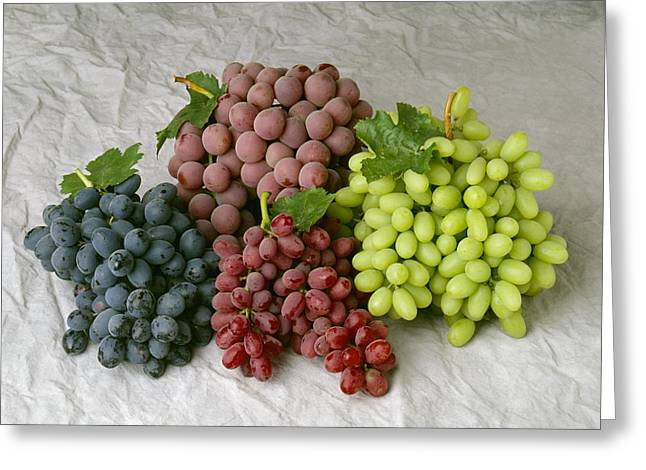 Grape Clusters Greeting Cards - Agriculture - Arrangement Of Four Greeting Card by Ed Young
