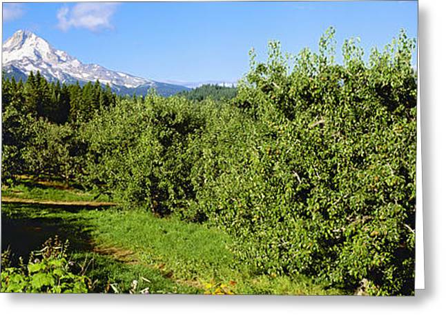 Mid Summer Morning Greeting Cards - Agriculture - Bosc Pear Orchard Greeting Card by Charles Blakeslee