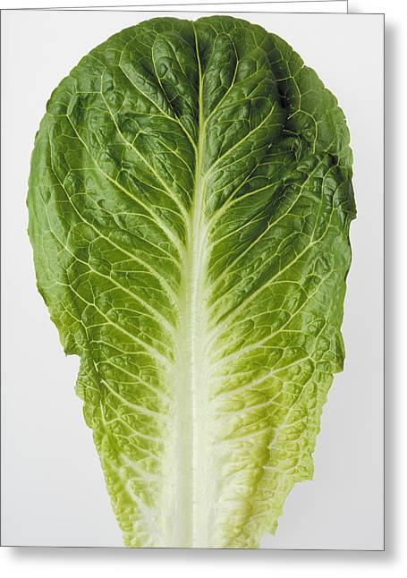 Lettuce Greeting Cards - Agriculture - Closeup Of A Romaine Greeting Card by Ed Young