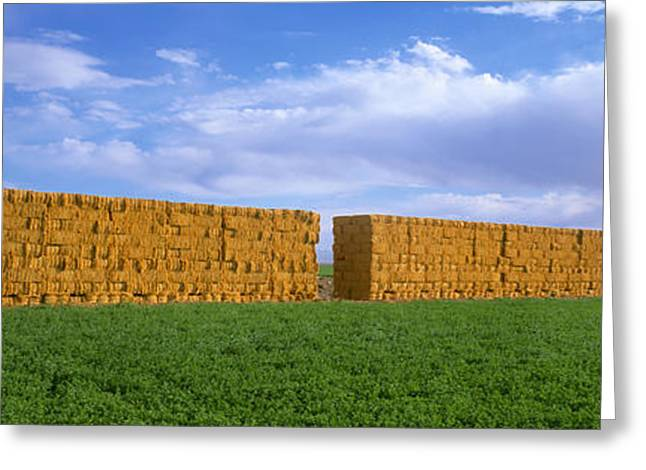 Hay Bales Greeting Cards - Agriculture - Stacks Of Alfalfa Hay Greeting Card by Timothy Hearsum