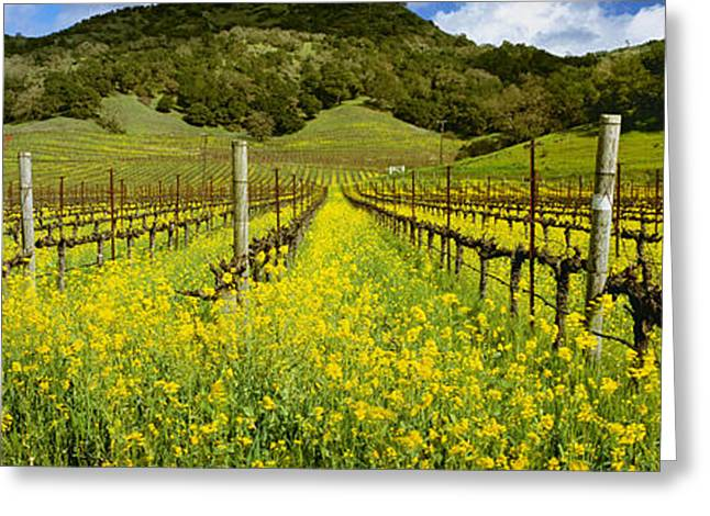 Grape Vineyard Greeting Cards - Agriculture - Wine Grape Vineyard Greeting Card by Charles Blakeslee