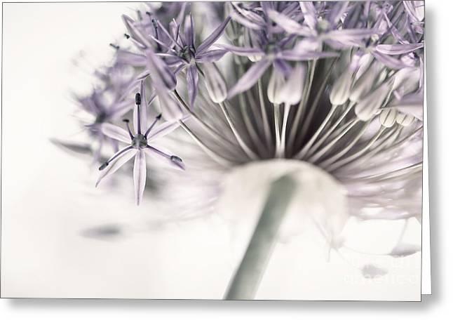 Alliums Greeting Cards - Allium flower Greeting Card by Elena Elisseeva