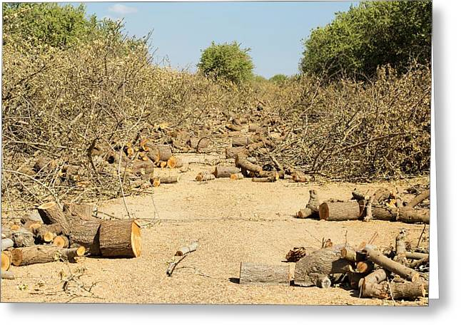 Almond Groves Being Chopped Down Greeting Card by Ashley Cooper