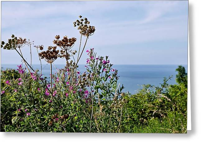 Wildfowers Greeting Cards - Along The Southwest Coastal Path Greeting Card by Susie Peek
