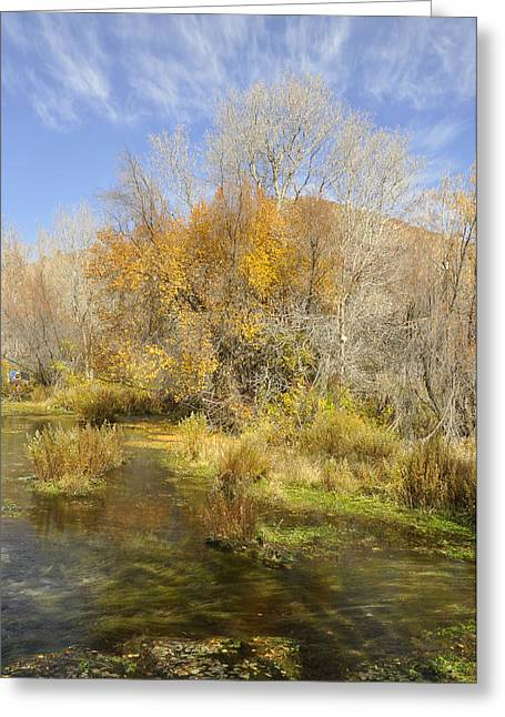 Fall Trees With Stream. Greeting Cards - Alpine Loop Scenic Byway American Fork Canyon Utah Greeting Card by Wendy Elliott