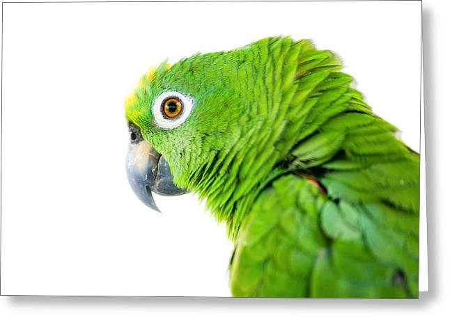 Amazona Ochrocephala Greeting Cards - Amazon parrot Greeting Card by Alexey Stiop