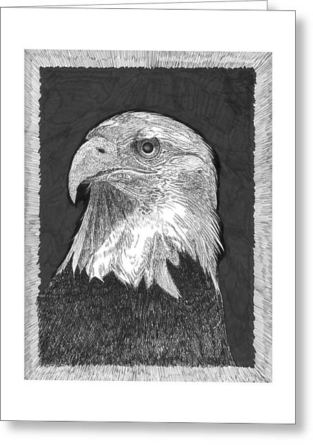 The North Drawings Greeting Cards - American Bald Eagle Greeting Card by Jack Pumphrey