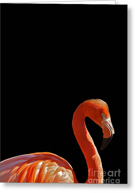 Flocks Of Birds Mixed Media Greeting Cards - American Pink Flamingo Greeting Card by Adam Asar