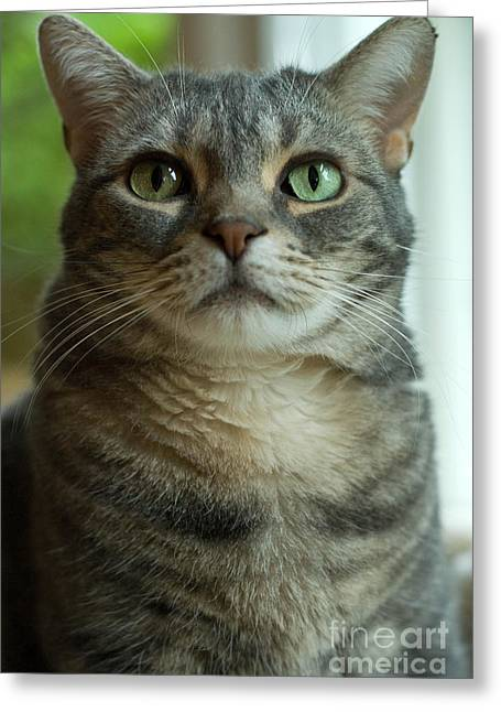 Striped Greeting Cards - American Shorthair Cat Profile Greeting Card by Amy Cicconi